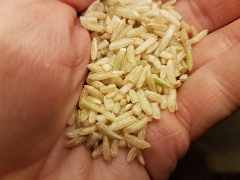 Hand holding sprouted brown basmati rice